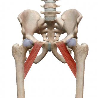 Боль в паху сустав болезни суставов в.и.мазуров